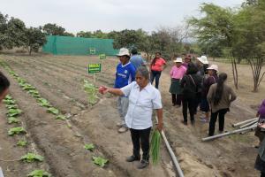 Ackerbau Peru