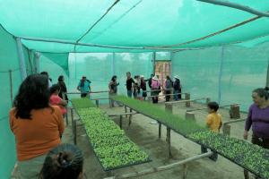 Aufzucht der Setzlinge für den Gemüseanbau